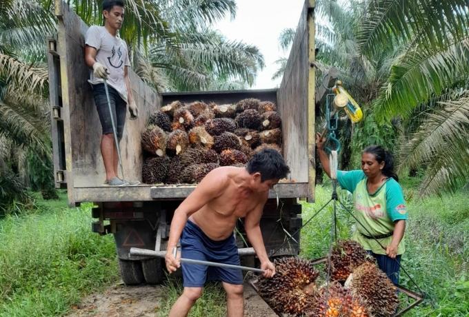 Pihak PTPN V Kriminalisasi 2 Petani Kampar Riau, Setara Institute Minta Erick Thohir Turun Tangan
